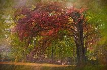 Lichtbaum by moqui