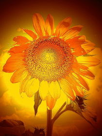 Blütentraum von Stefan Grajek