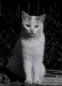 Cat von Stefan Grajek