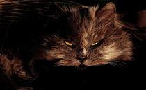 Die Katze by Stefan Grajek
