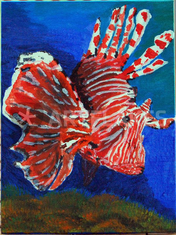 """""""rotfeuerfisch"""" bild als poster und kunstdruck von olaf"""