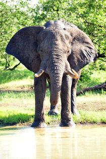 elefantenbulle von ralf werner froelich