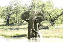 elefant am wasserloch von ralf werner froelich