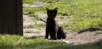 Die Kleine Katze von Christine Bürger