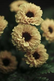 Die gelben Blumen von Christine Bürger