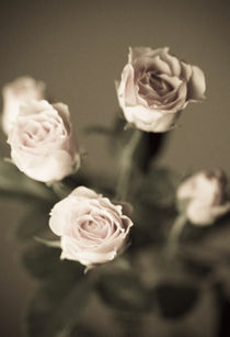 Rosen von Christine Bürger