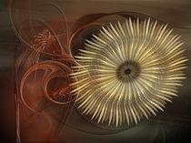 Sonnenblume von deboracilli