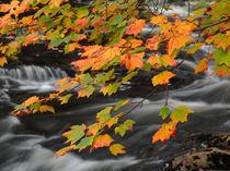 Herbstfarben von Juergen Roth