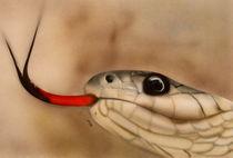 Schlange von Günter Stieger