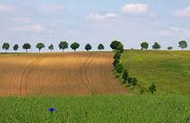 Landschaftsarchitektur von spiritofnature