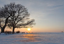 My old trees in sunset in winter by spiritofnature
