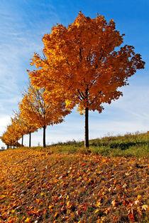 Wenn die Blätter fallen von spiritofnature
