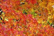 Farben des Herbstes von spiritofnature