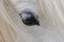 Eye of the horse von spiritofnature