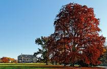 Herbstzauber by spiritofnature