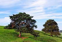Beautiful old trees von spiritofnature