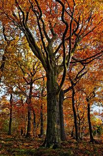 Herbstwald von spiritofnature