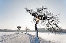 Frozen by spiritofnature