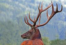 König der Wälder von spiritofnature