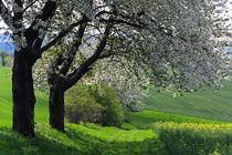 Blütenträume by spiritofnature