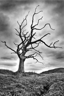 The dead tree von Sebastian Wuttke
