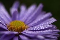 Tautropfen auf Blüte von Martin Kretschmar