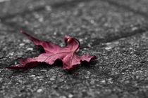 Herbst von Martin Kretschmar