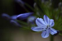 zartes blau von Martin Kretschmar