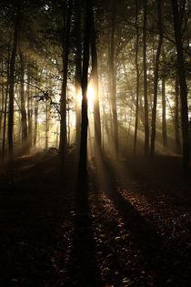 Morgen im Wald II von Martin Kretschmar