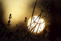 Abendsonne von ckfotodesign
