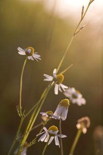 Summer Sun by Martina Raab