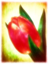 Rote Tulpe von Maria Arato Magri