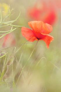 Poppy by Martina Raab