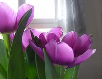 Tulpen 02 by Miriam Hoffmann