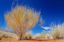 Gelber Strauch in der Wüste by Markus Ulrich