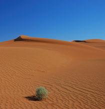 Zäher Busch in der Wüste by Markus Ulrich