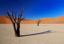 Abgestorbene Bäume im Deadvlei von Markus Ulrich