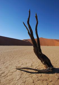 Toter Baum im Deadvlei von Markus Ulrich