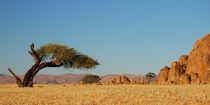 Vom Wind gezeichneter Baum in der Wüste by Markus Ulrich
