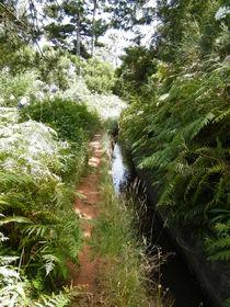 Waldweg  by kaya-1
