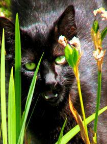 Portrait einer jagenden Katze hinter Grashalmen by opaho