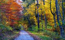 Bunter Herbstwaldwanderweg von opaho