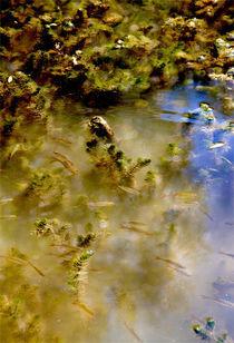Das Leben im Teich von opaho