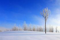 außerirdisches Blau an einem Wintertag von opaho
