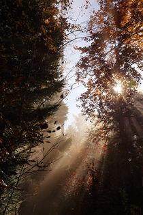 Herbstmorgen by Norbert Fenske
