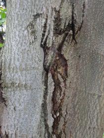 Frauenakt auf Baum von INGRID HECHT