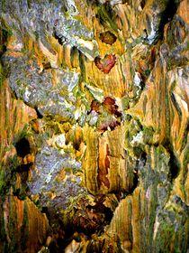 Herzen eines Baumes by INGRID HECHT