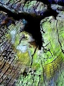 Flieg Vogel by INGRID HECHT
