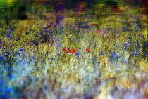 Der Duft der Farben II von Katharina Kabara