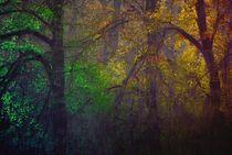 Der Wald von Katharina Kabara